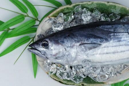 あお ざかな 種類 「赤身魚」「白身魚」「青魚」 - 違いがわかる事典